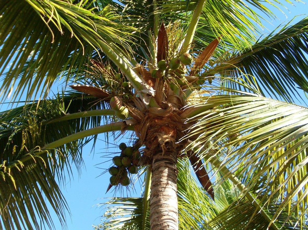 Martinique - Anse Mabouya (1)