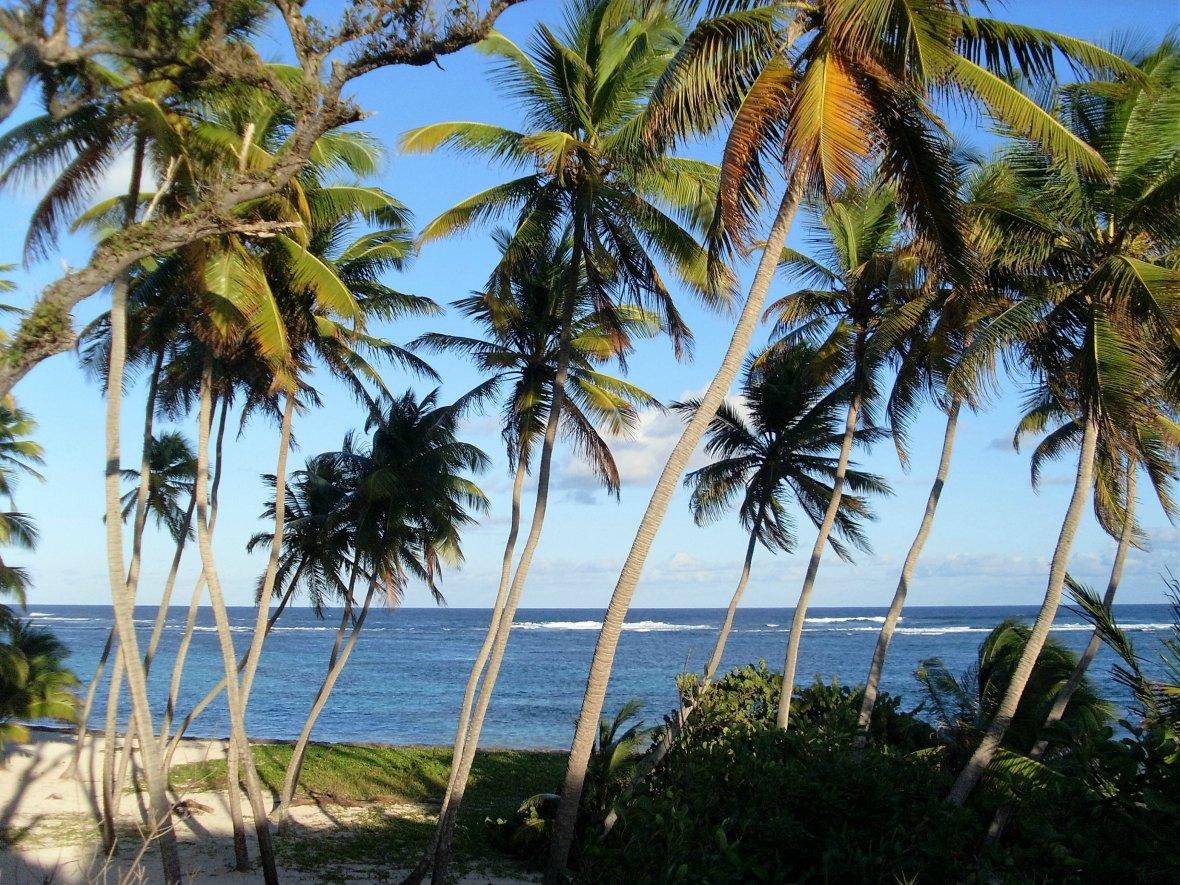 Martinique - Anse Michel (3)