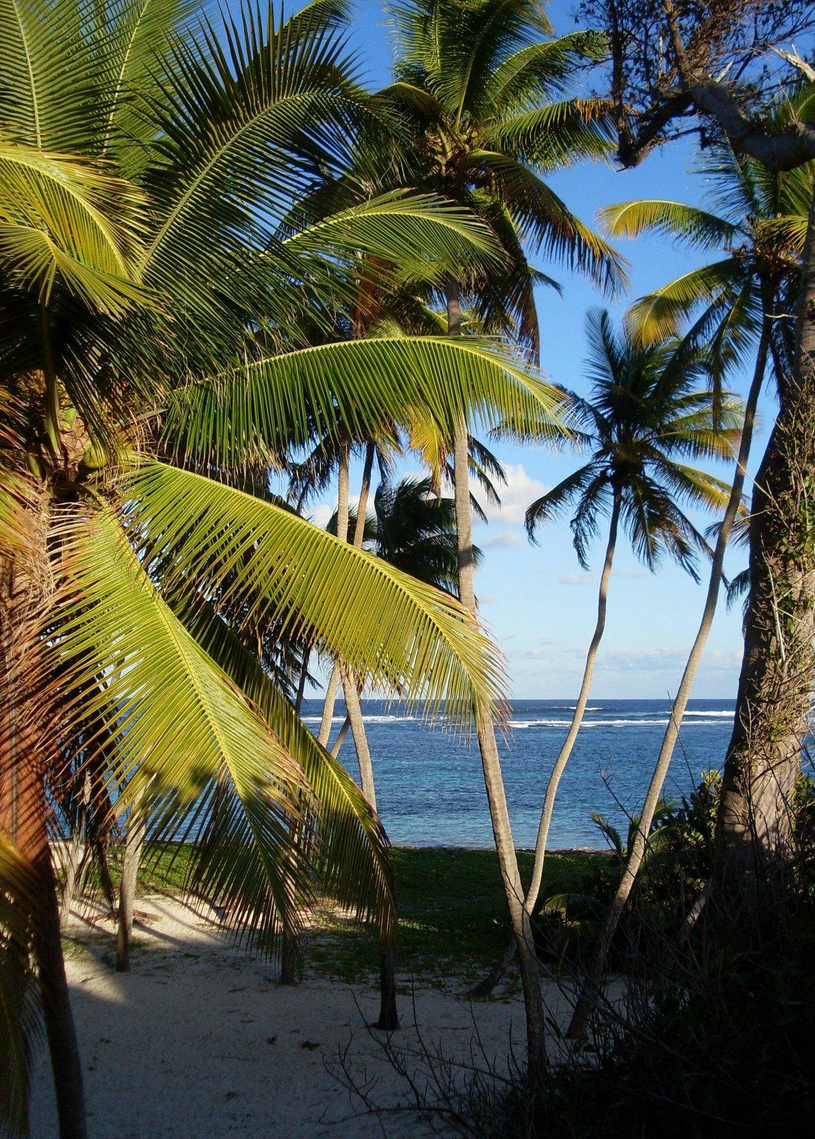 Martinique - Anse Michel (4)
