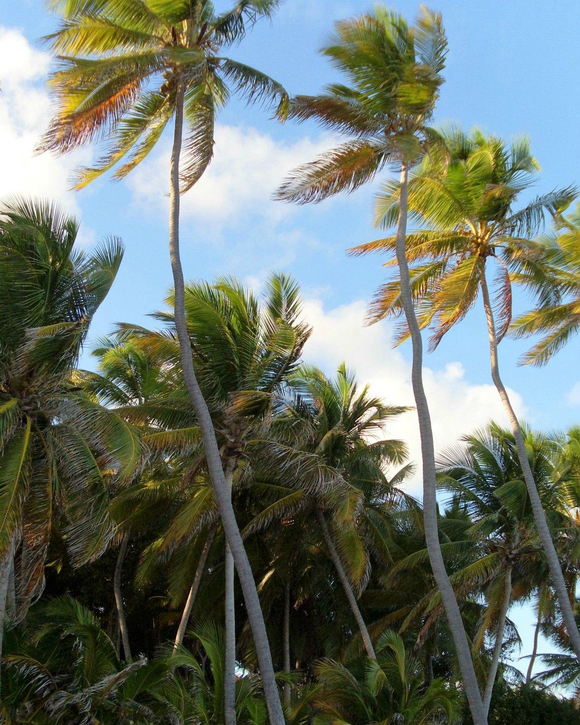 Martinique - Anse Michel (5)