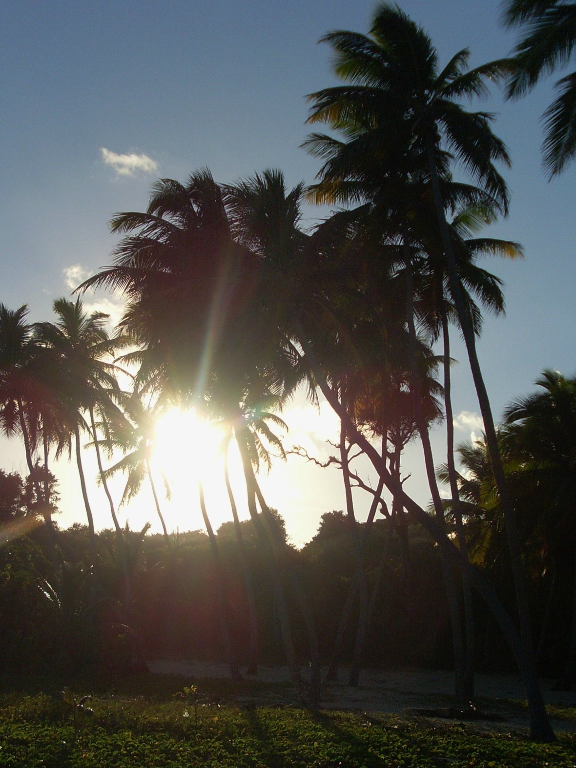 Martinique - Anse Michel (6)