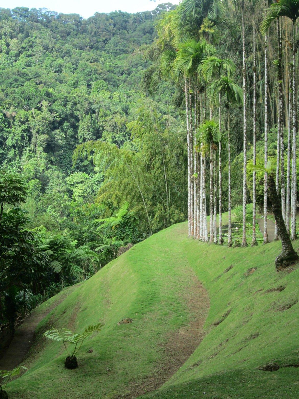 Martinique - Balata (1)