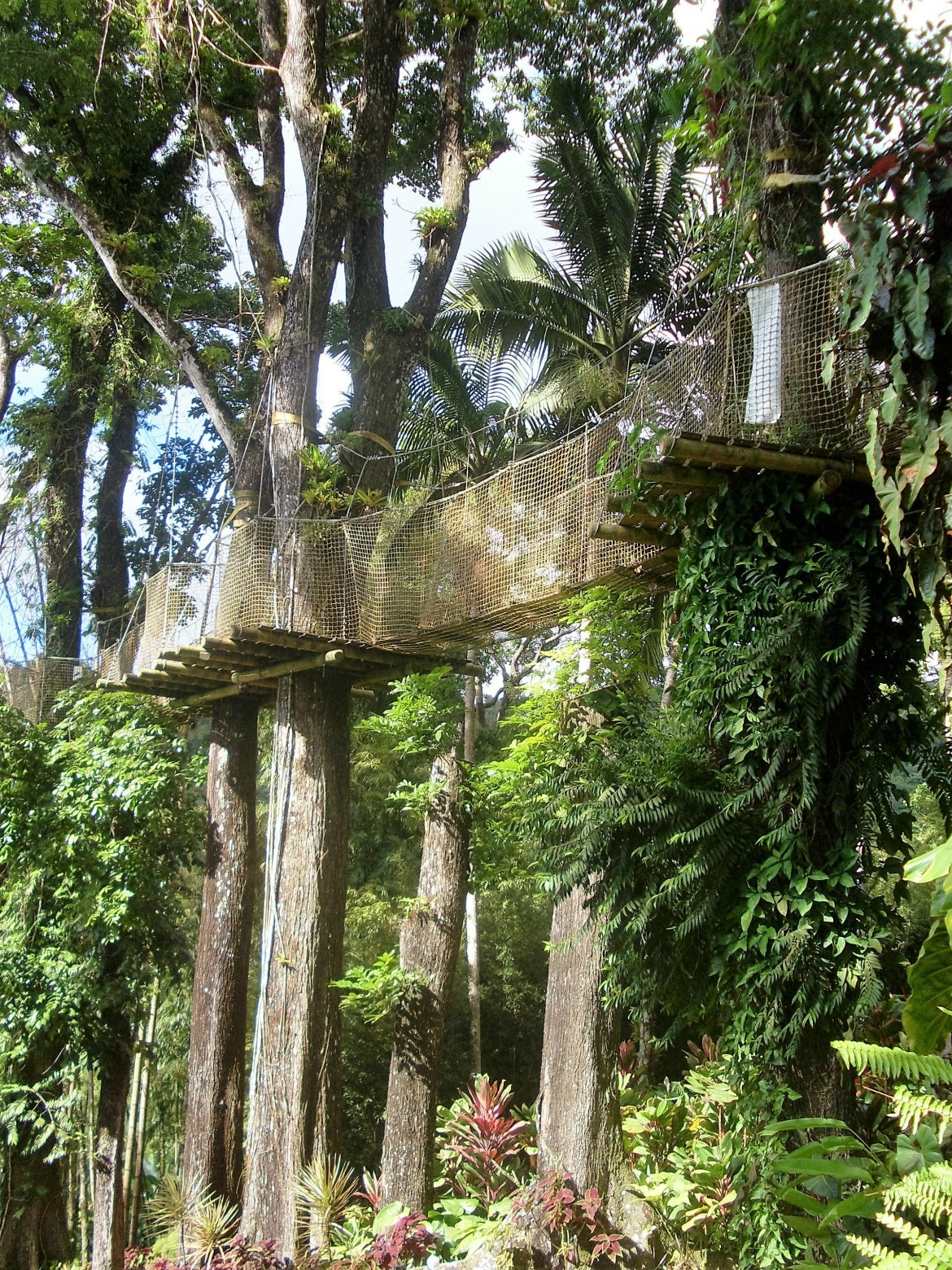 Martinique - Balata (10)