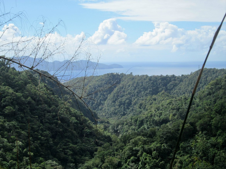 Martinique - Balata (2)