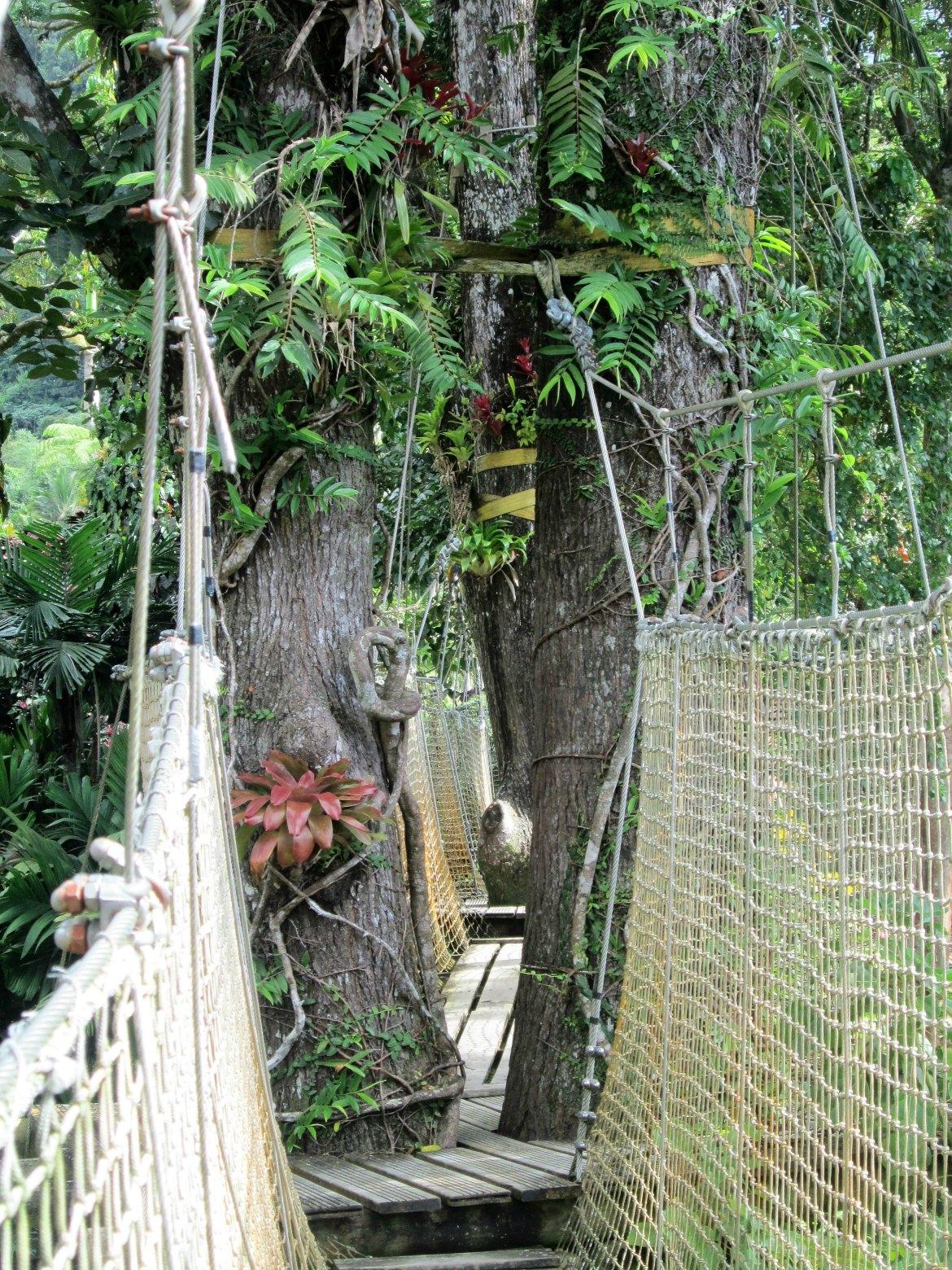 Martinique - Balata (3)