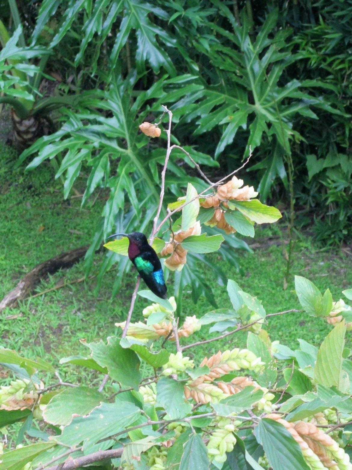 Martinique - Balata (4)