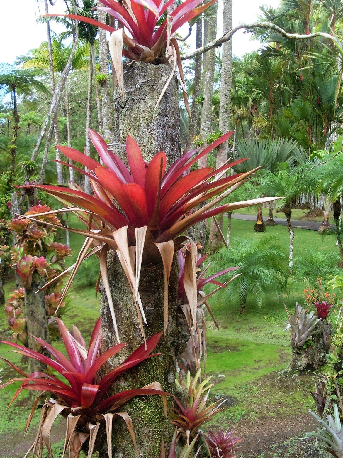 Martinique - Balata (5)