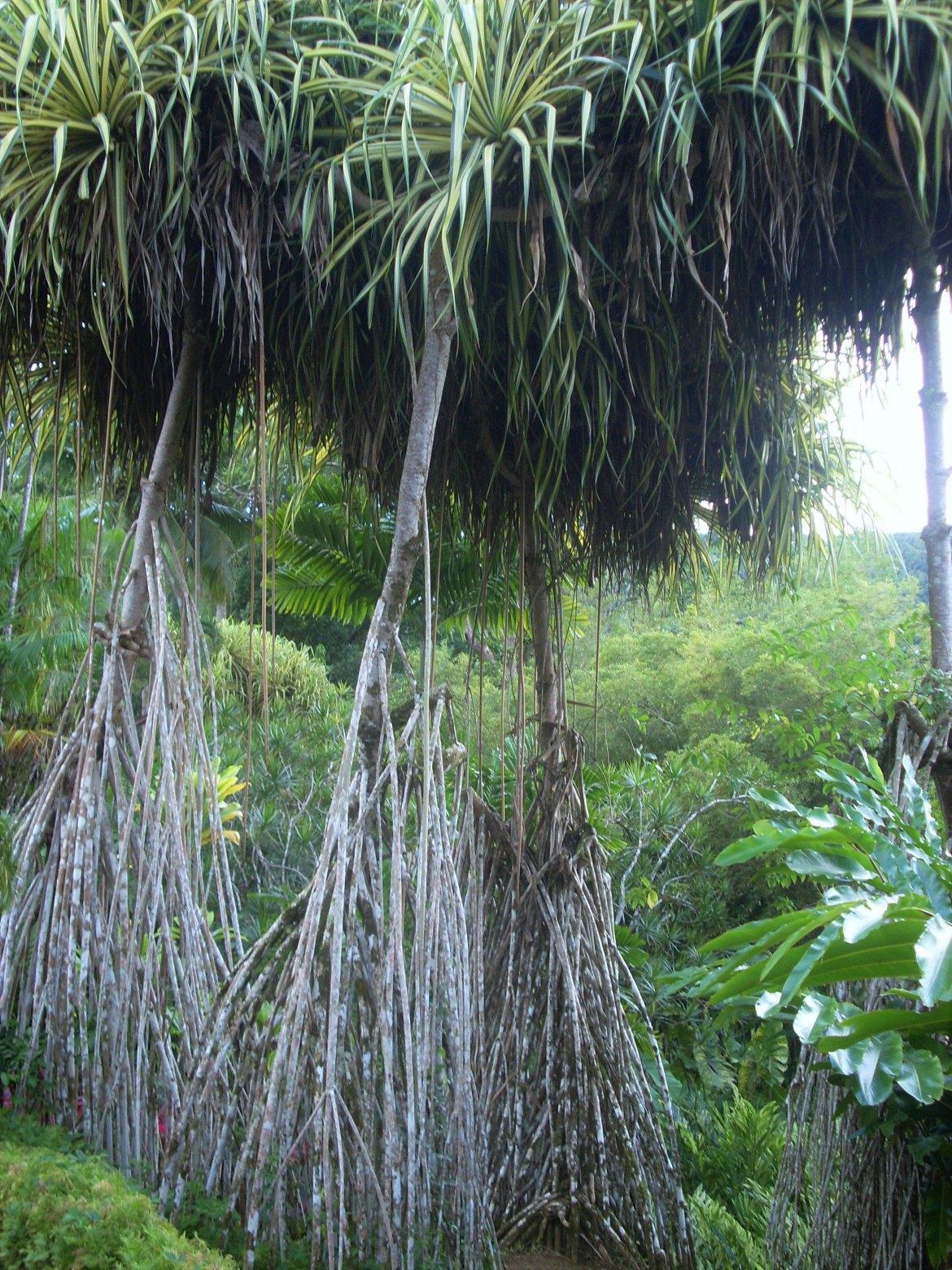 Martinique - Balata (6)