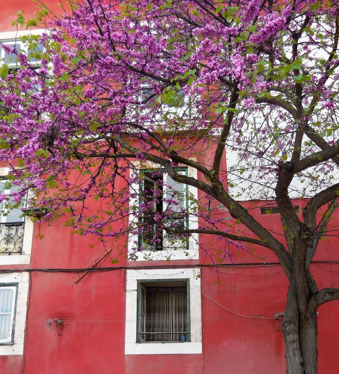 Portugal - Lisbonne - Alfama (6)