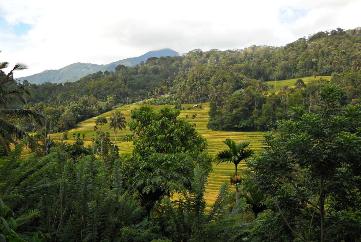 Sri Lanka - Knuckles range (1)
