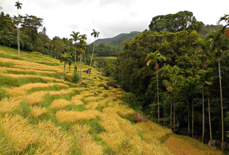 Sri Lanka - Knuckles range (3)