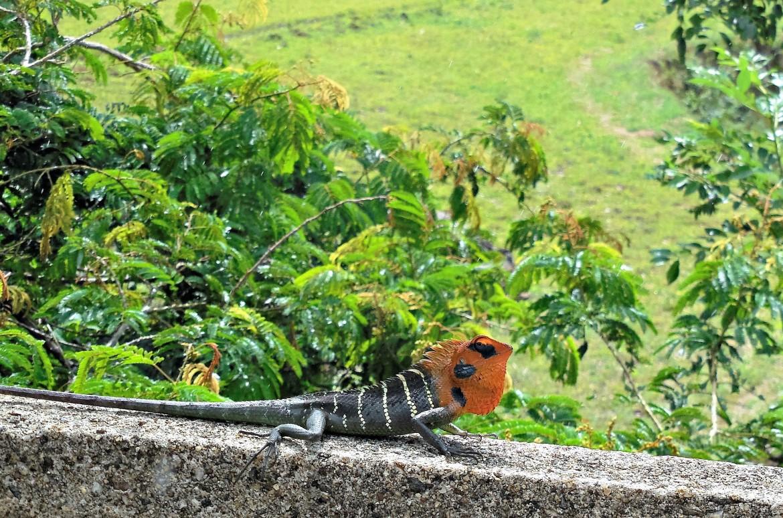 Sri Lanka - Knuckles range (4)