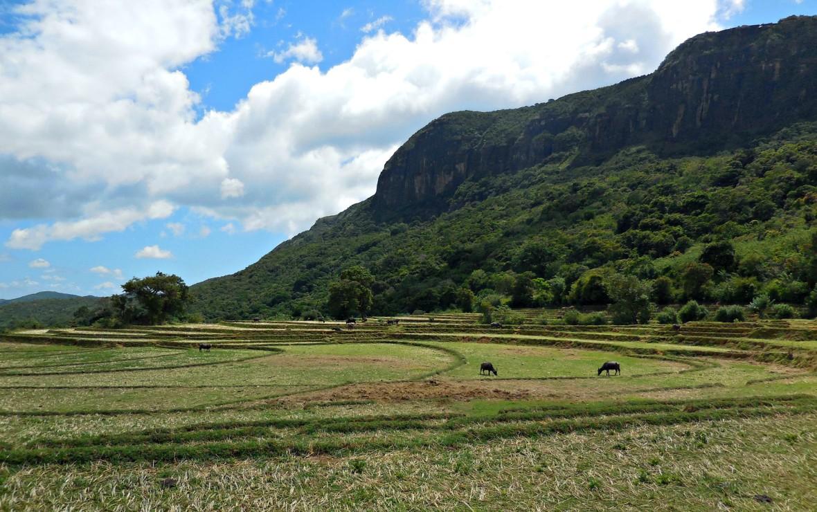 Sri Lanka - Knuckles range (5)