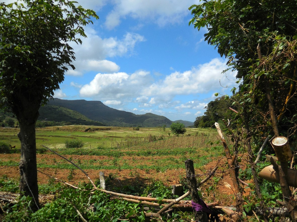 Sri Lanka - Knuckles range (8)