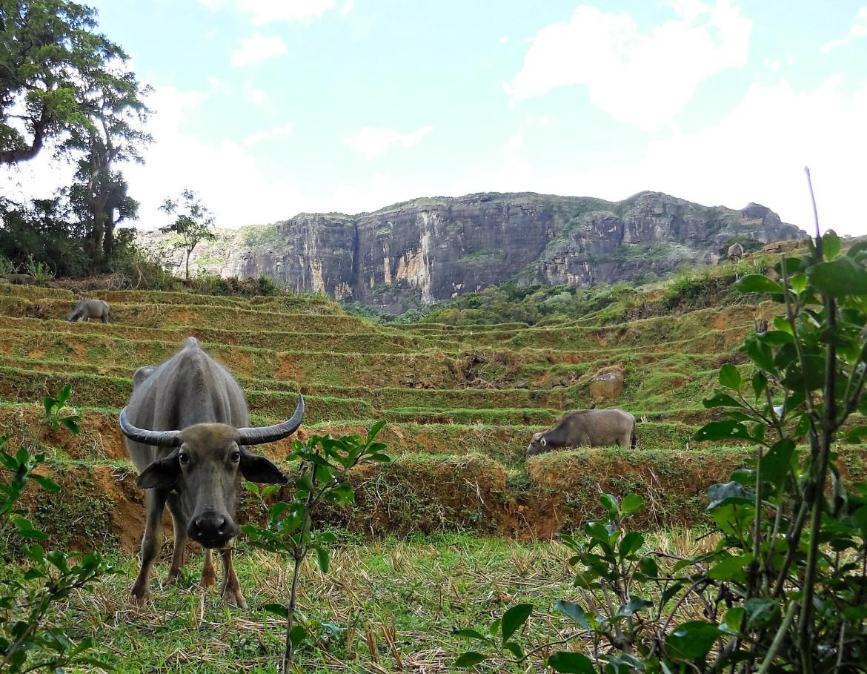 Sri Lanka - Knuckles range (9)