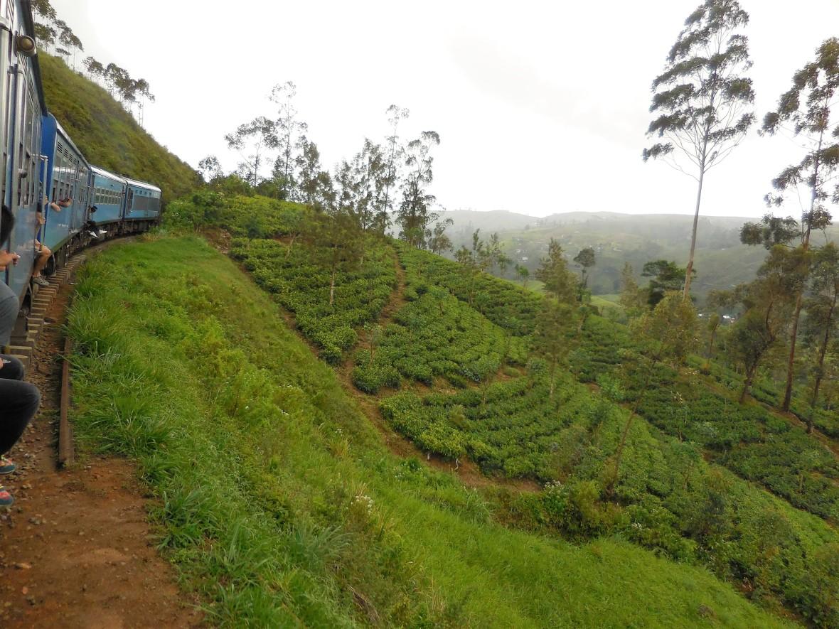 Sri Lanka - Train Colombo-Ohiya (7)