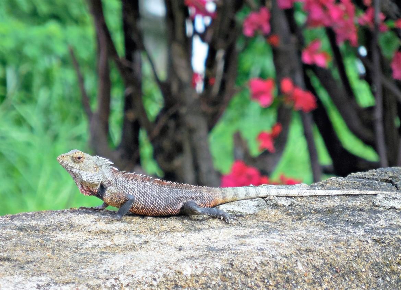 Sri Lanka - Uda Walawe (1)