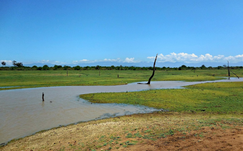 Sri Lanka - Uda Walawe (10)