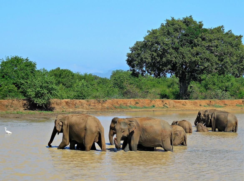 Sri Lanka - Uda Walawe (3)