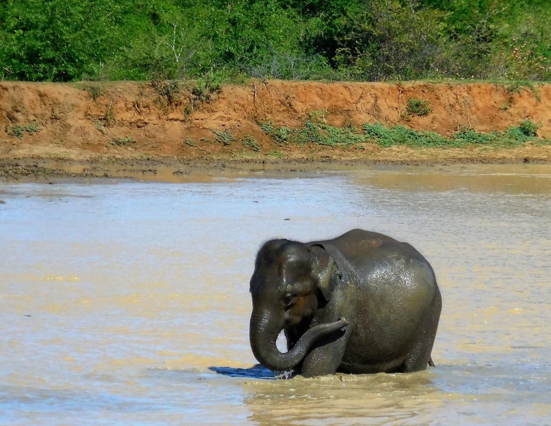 Sri Lanka - Uda Walawe (4)