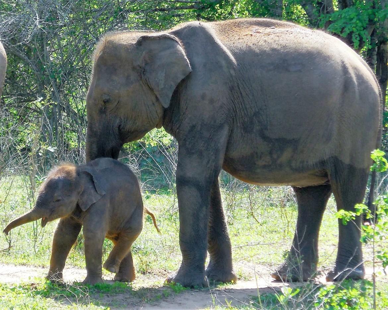 Sri Lanka - Uda Walawe (5)