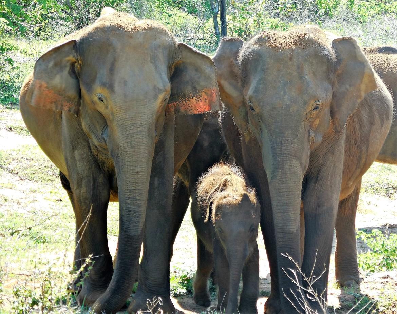 Sri Lanka - Uda Walawe (6)
