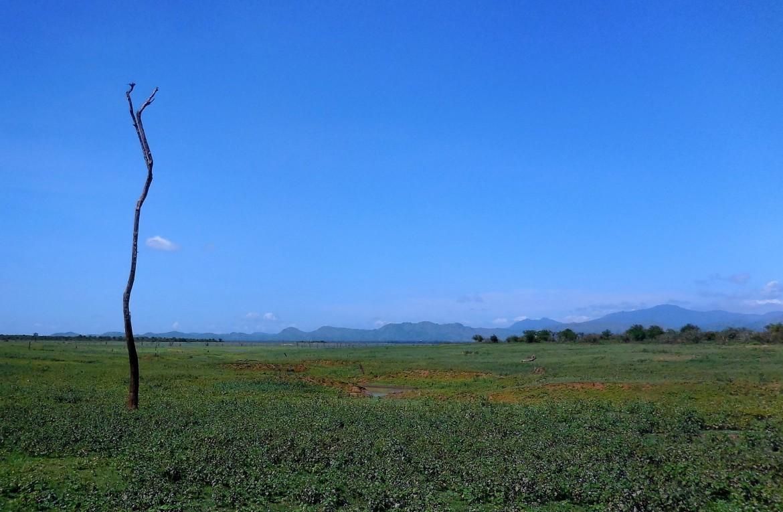 Sri Lanka - Uda Walawe (8)