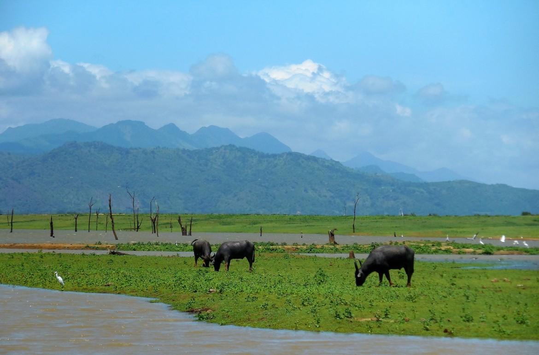 Sri Lanka - Uda Walawe (9)