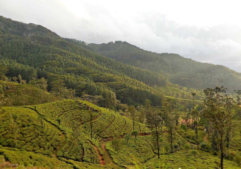 Sri Lanka - Udaveria (1)
