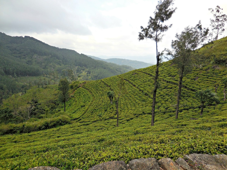 Sri Lanka - Udaveria (2)