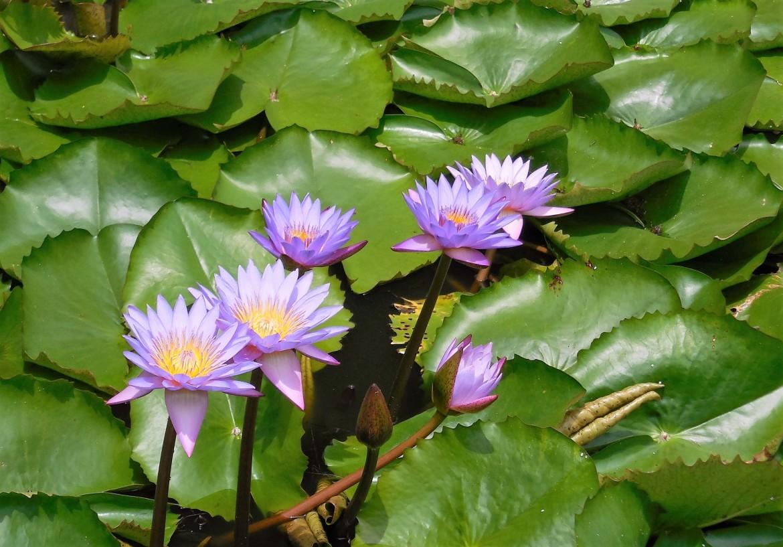 Sri Lanka - Dambulla (7)