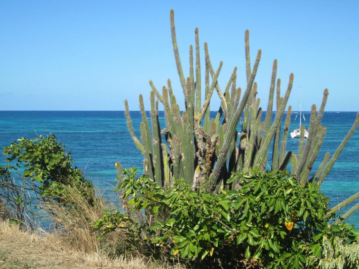 Martinique - Pointe Faula (1)