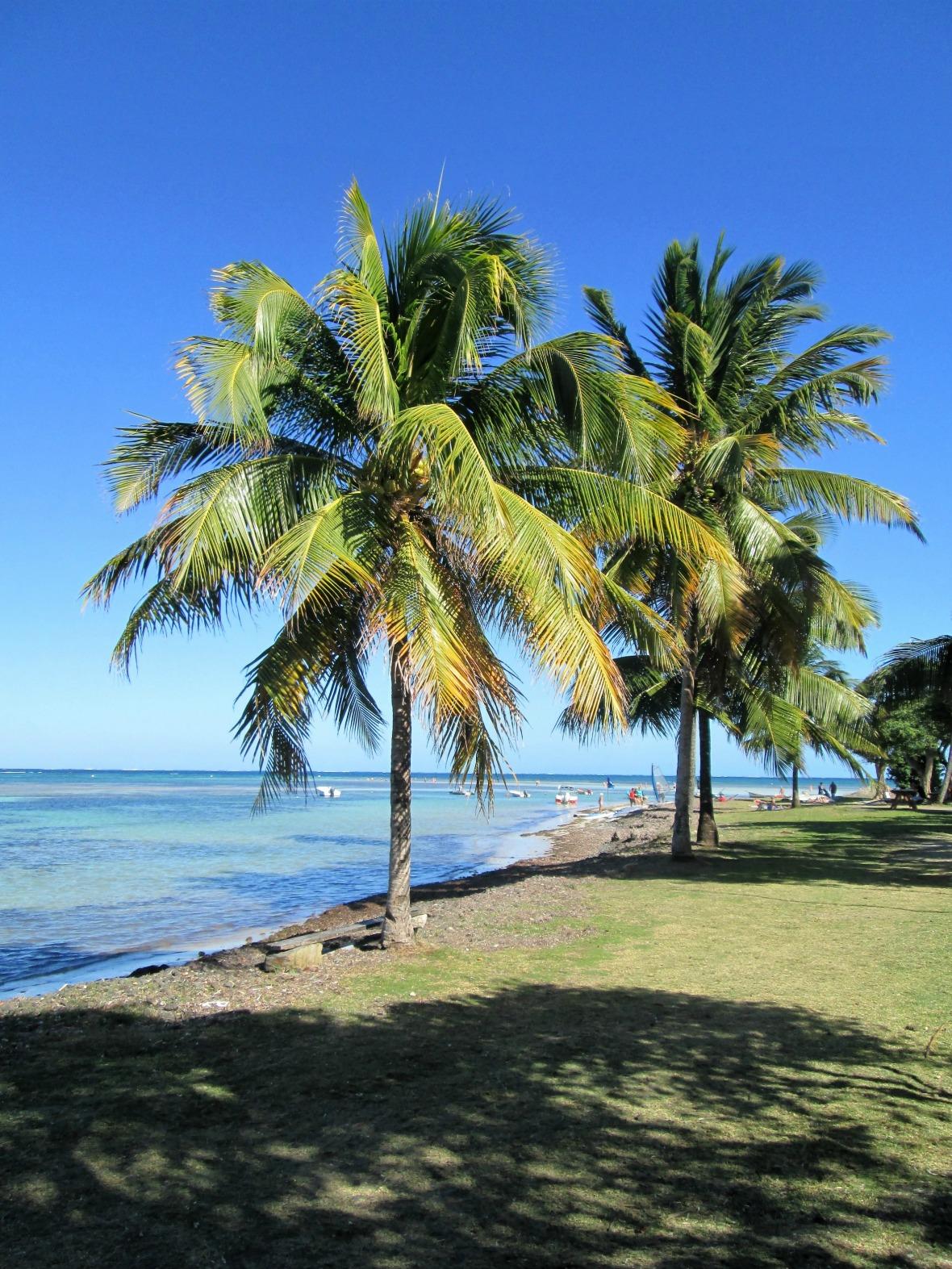 Martinique - Pointe Faula (3)