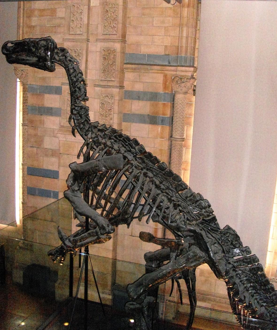 Londres - Musée d'Histoire Naturelle (3)