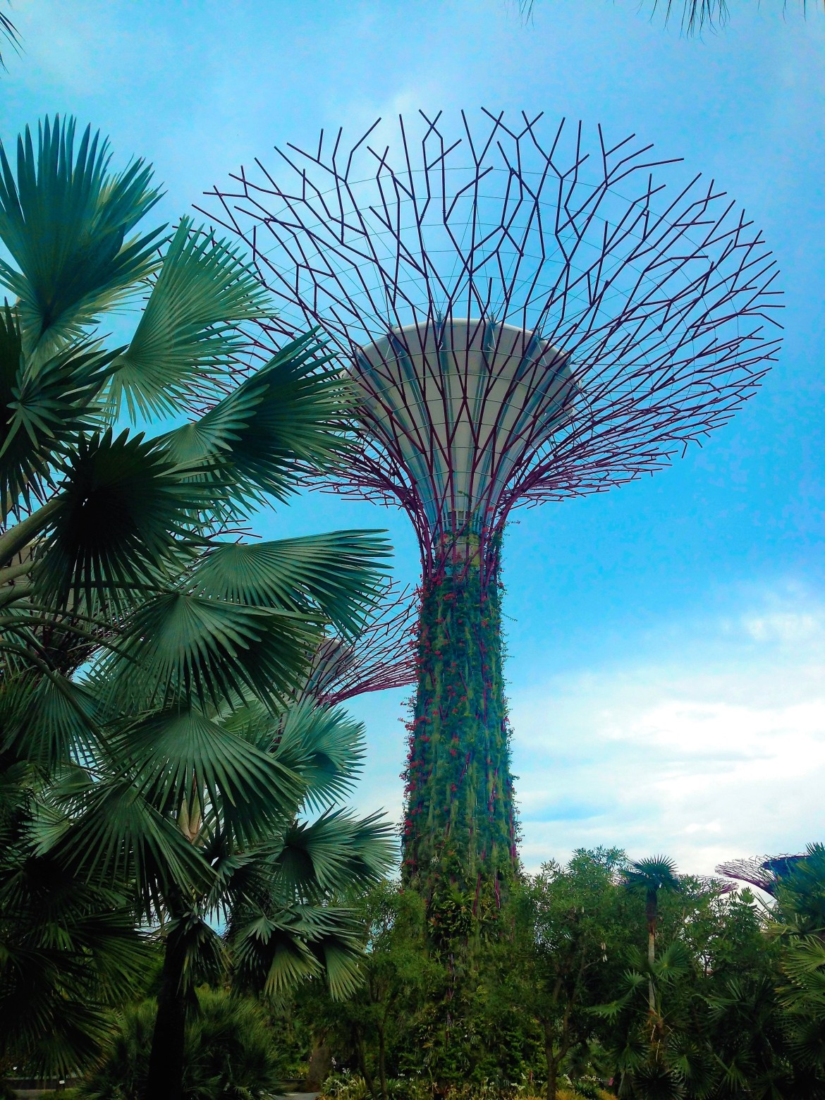 Singapour - Gardens by the bay (3)