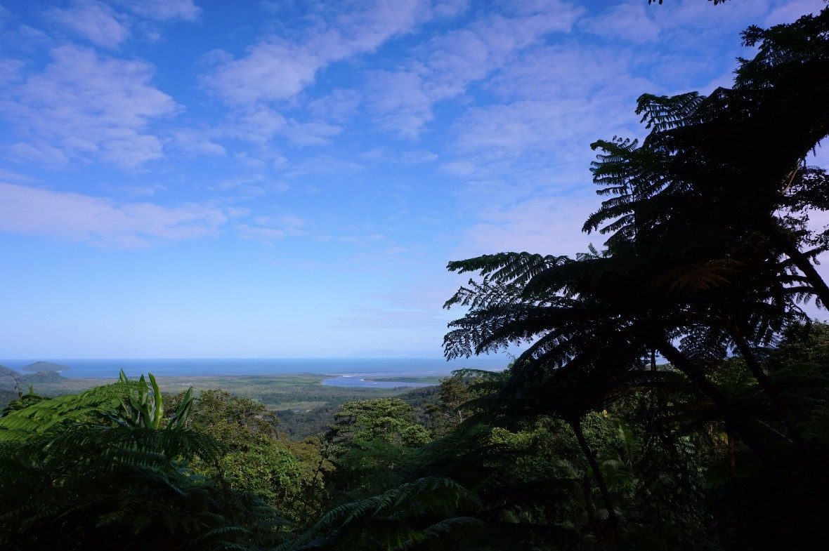 Australie - Daintree Rainforest (2)