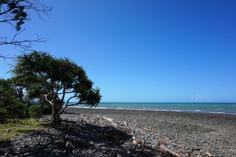 Australie - Daintree Rainforest (4)