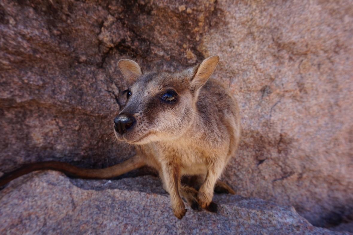 Australie - Magnetic Island  (7)