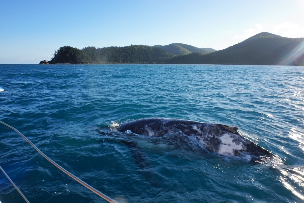 Australie - Whitsundays sailing (13)