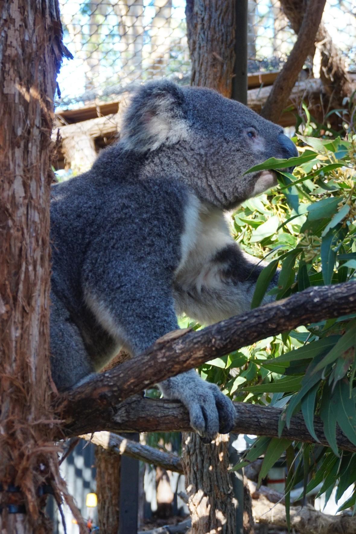 Australie - Port Macquarie (2)