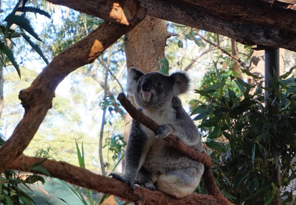 Australie - Port Macquarie (3)