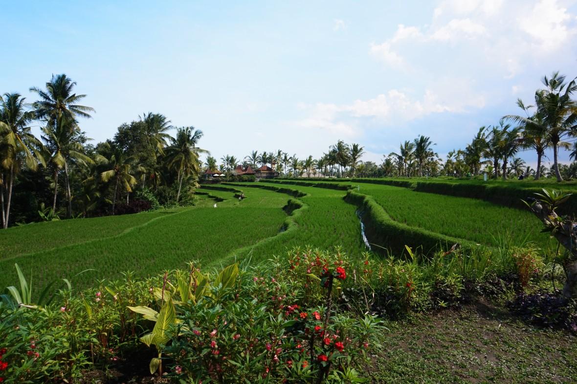 Indonésie - Bali - Ubud (13)