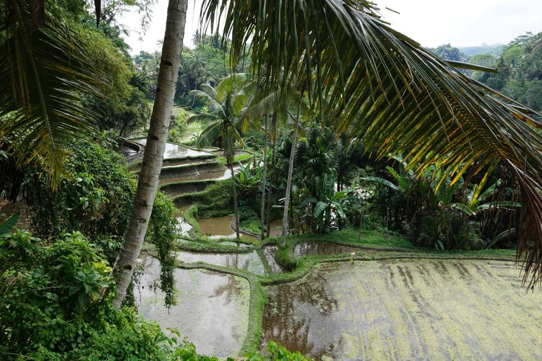 Indonésie - Bali - Ubud (6)