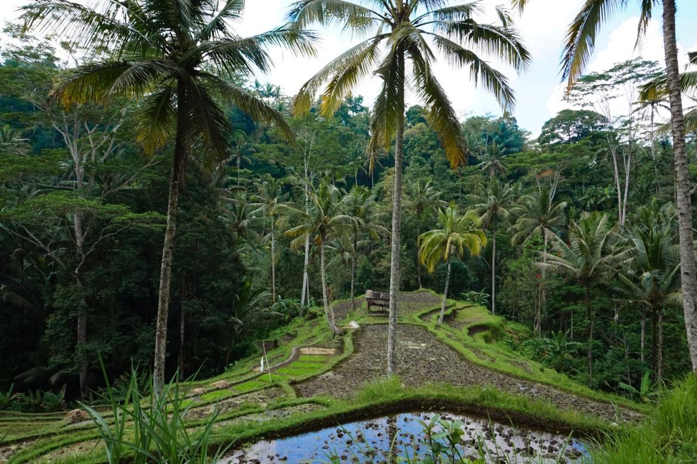 Indonésie - Bali - Ubud (7)