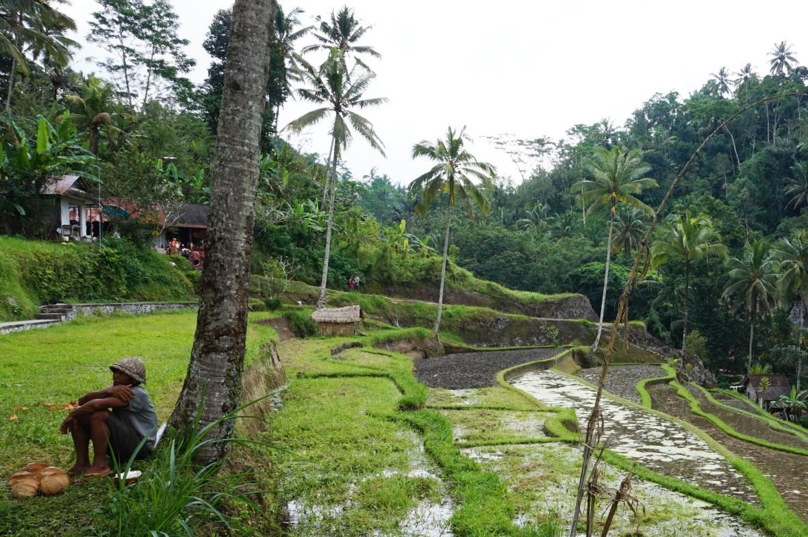 Indonésie - Bali - Ubud (8)