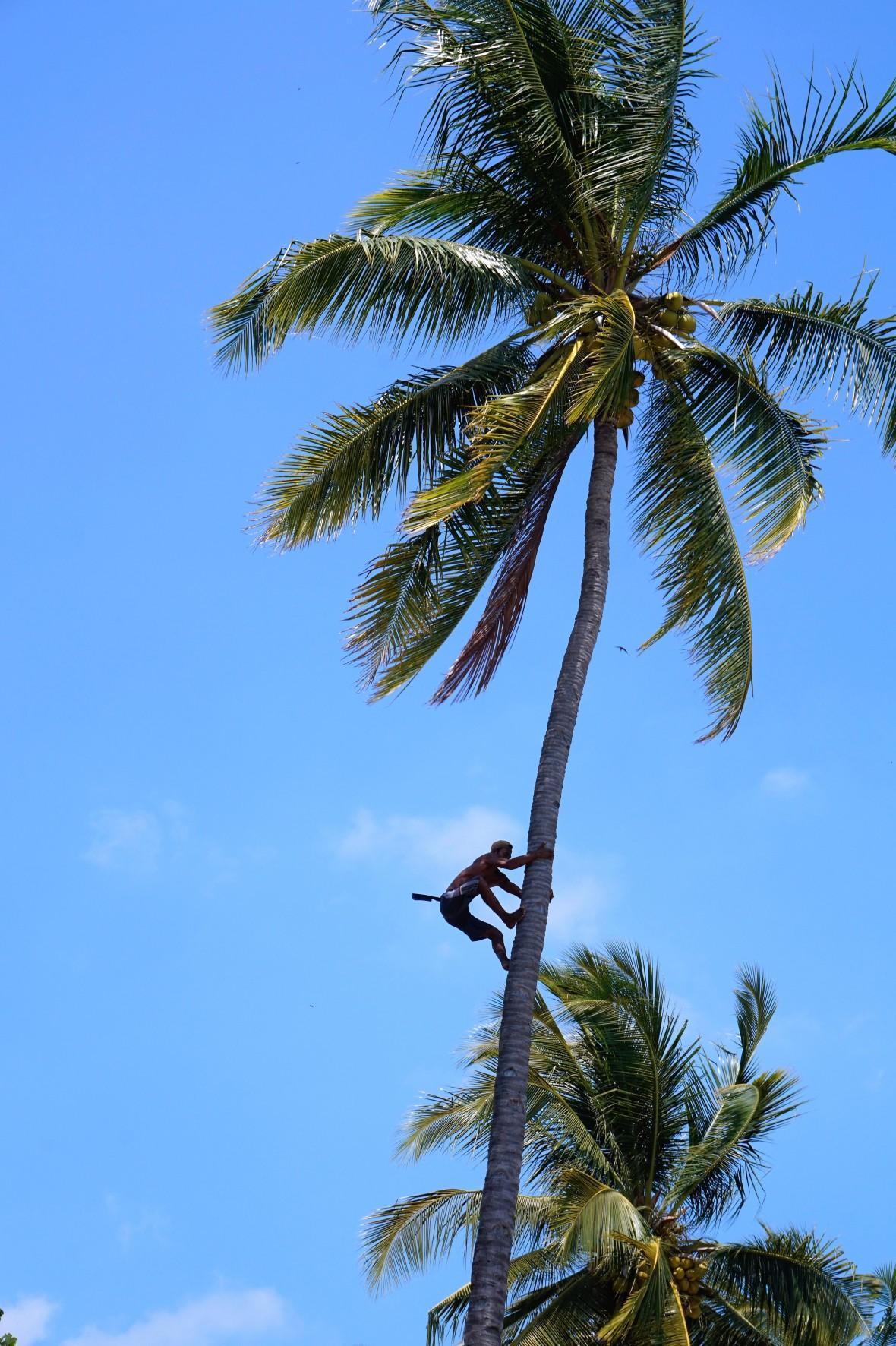 Indonesie - Lombok (5)